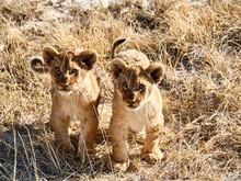 Africa, Namibia, Halali, Etosh...