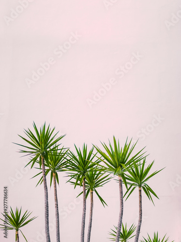 Pinturas sobre lienzo  Hawaii Hotel Tropical Plants
