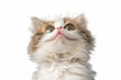 funny kitten portrait on white isolated background