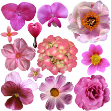 Set Of Different Pink Isolated Flowers