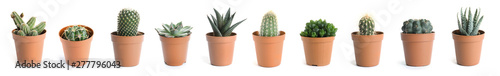 Spoed Foto op Canvas Cactus Beautiful cactus on white background