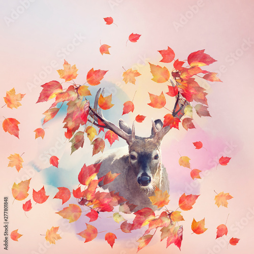 Poster Personal Deer male portrait with autumn concept