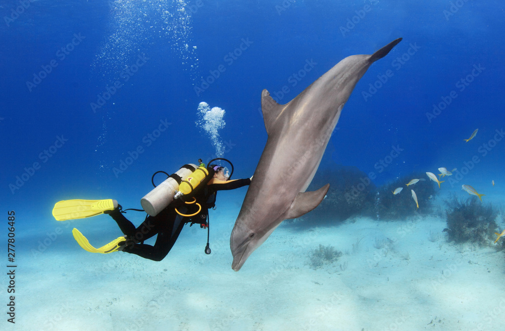 Fototapeta Female diver plays with a friendly dolphin