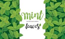 Green Mint Leaves On Backgroun...