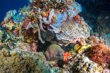 A Large Moray Eel With Vibrant...