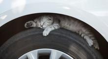 The Kitten Is Sleeping On A Ca...