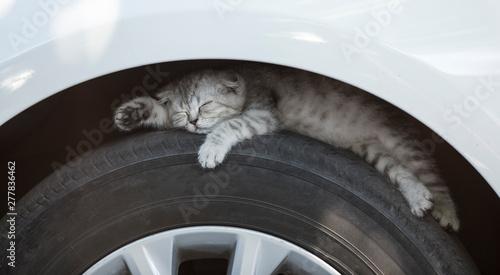 the kitten is sleeping on a car tire Wallpaper Mural