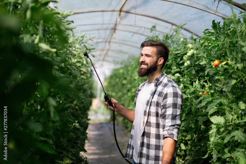 Fototapety, obrazy: Young farmer protecting his plants with chemicals