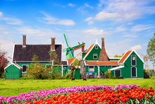 Dutch Typical Landscape. Traditional Old Dutch Windmill With Old Houses And Tulips Against Blue Cloudy Sky In The Zaanse Schans Village, Netherlands. Sheep Grazing On Green Grass.