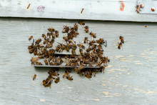 Bees Entering The Artificial Hive