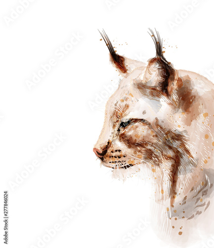 Fotografia Lynx vector watercolor isolated on white background