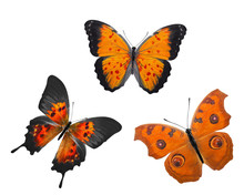 Orange Tropical Butterflies. Tropical Insects. Isolated On White