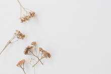 Dry Floral Branch On White Bac...