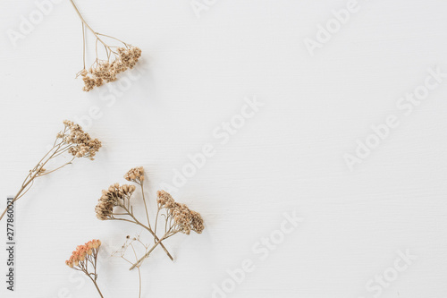 Dry floral branch on white background. Flat lay, top view minimal neutral flower composition.