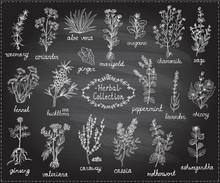 Medicine Herbs Collection, Han...
