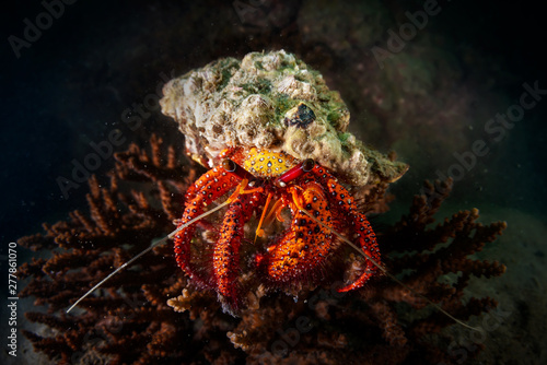 Photo A hermit crab shot wide angle