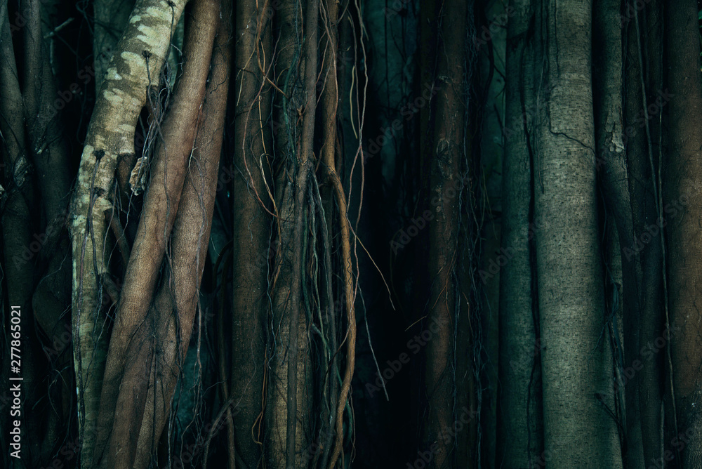 Fototapety, obrazy: Tree Trunk And Root Background.