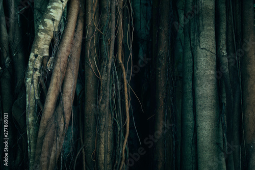 Photo  Tree Trunk And Root Background.