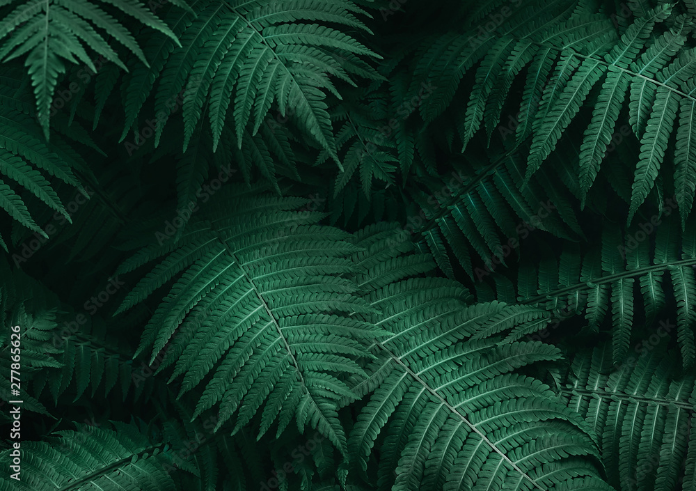 Fototapeta Perfect natural young fern leaves pattern background. Dark and moody feel. Top view. Copy space.