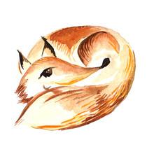 Watercolor Red Fox