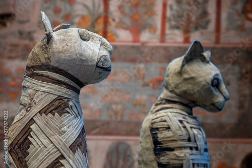 Mummified cat mummy egyptian in a pyramid tomb Wallpaper Mural