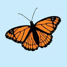 Print  A Vector Illustration Of A Viceroy Butterfly Slightly Slanted On A Blue Background