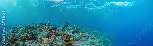 La pose en embrasure Recifs coralliens Underwater Panorama of Tropical Reef