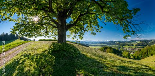 Sonne scheint durchs Blätterdach von grossem Laubbaum im Emmental bei Hasle-Rüeg Fototapeta