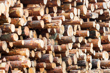 Sawn Logs Stacked In Stacks Cl...