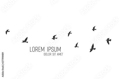 Fototapeta silhouette of a flock of flying birds obraz