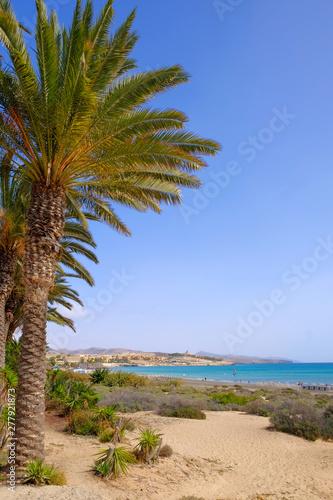 Garden Poster Natural Park Beach Costa Calma on Fuerteventura, Canary Islands.