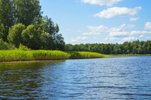 High Aquatic Green Natural Beautiful Plants Bushes Grass Reeds Against The Backdrop Of The River Bank And Blue Sky