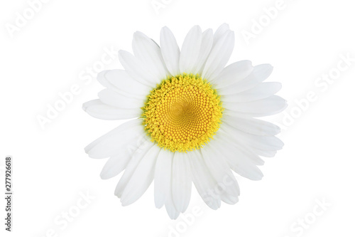 Deurstickers Madeliefjes one chamomile or daisies isolated on white background
