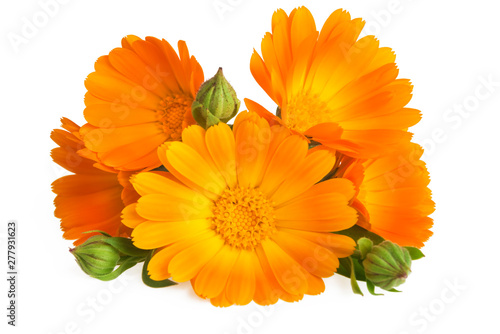Flowers with leaves Calendula (Calendula officinalis, garden marigold, English marigold) . Medicinal herb. Selective focus