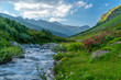 Alpenrosenblüte in den Alpen