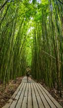 Bamboo Forest Of Hana, Maui