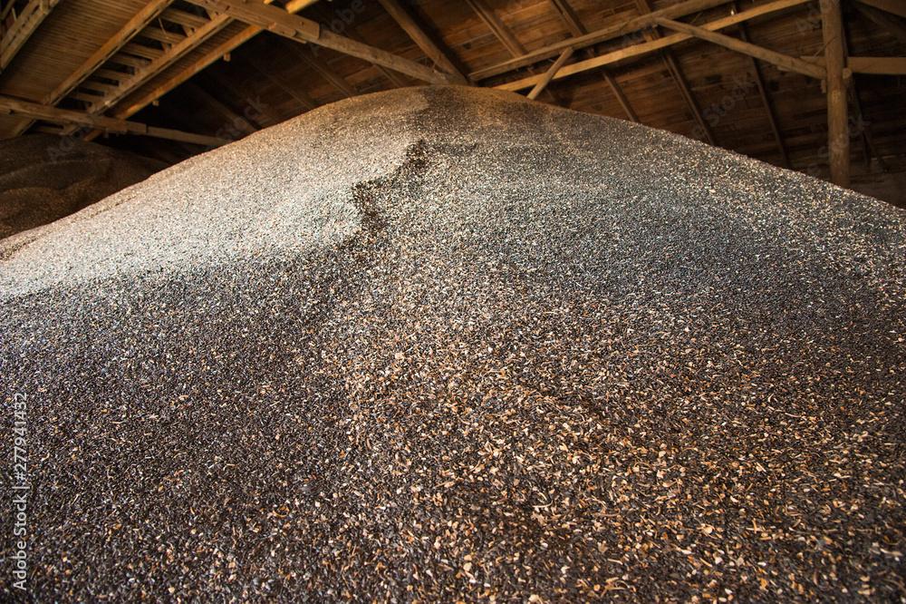 Fototapety, obrazy: Sunflower seeds in storage