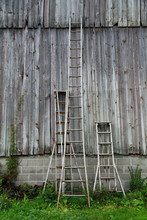 Orchard Tall Ladders