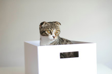 Cute Adorable Cat  Playing In A Box