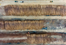 Aerial View Of Logs Piled Up A...