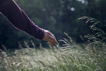 Man Touching Grass While Walking In Field