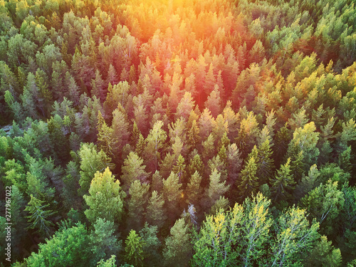 Obraz Scenic top down view of mixed forest in Finnish countryside - fototapety do salonu