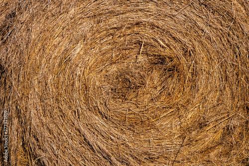 Foto Rollo de paja para alimentar el ganado El heno es hierba, legumbres u otras plantas herbáceas que han sido cortadas y secadas para ser almacenadas para su uso como forraje animal