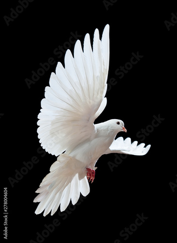 Tableau sur Toile Flying white doves on a black background