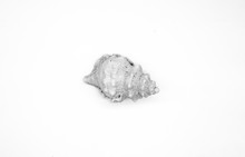 Sea Shell Isolated On White Ba...
