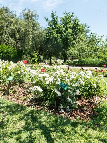 Photo the Park Cervantes, rose garden, Barcelona.