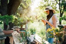 Beautiful Woman Transplanting Bonsai A Into A New Pot While Using Smartphone