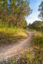 Narrow Dirt Road Amid Grasses And Trees With View Of Bright Sky Overhead