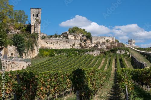 Fotografie, Tablou st emilion vignes