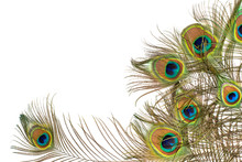 Peacock Feathers On White Background With Copy Space